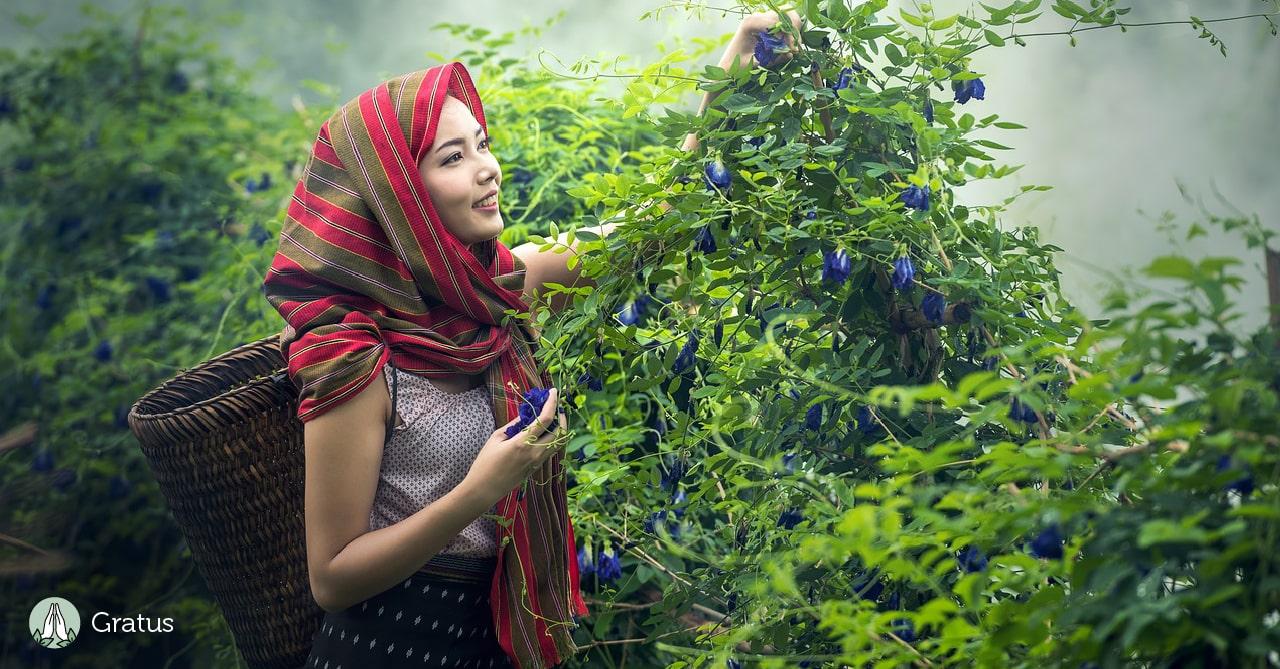 צמחי מרפא מומלצים